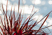 Turf Art - Red Grass White Light 2 - Featured 3 by Alexander Senin
