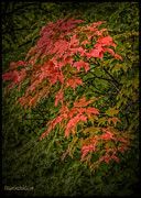 LeeAnn McLaneGoetz McLaneGoetzStudioLLCcom - Red Green Leaves in Fall