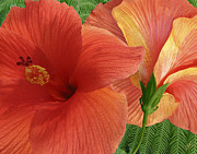 Lush Colors Digital Art Posters - Red Hibiscus Poster by Ben and Raisa Gertsberg