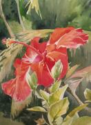 Flower Still Life Prints Posters - Red Hibiscus Poster by Lisa Pope
