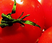 Red And Green Photo Posters - Red Hot Tomato Poster by Karen Wiles