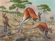 Jump Shot Posters - Red Kangaroo Poster by ACE Coinage painting by Michael Rothman