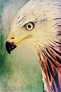 Hawk Mixed Media - Red Kite Art by Angela Doelling AD DESIGN Photo and PhotoArt