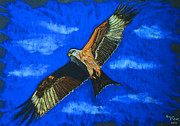 Buzzard Pastels Prints - Red Kite Print by Dawn  Davies