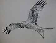 Kites Drawings - Red Kite by Dawn Noble