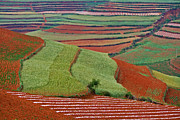 Jason KS Leung - Red Land 06
