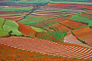 Jason KS Leung - Red Land 07