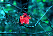 Matthew Turlington - Red Leaf - 2002