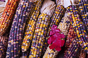 Corns Photos - Red leaf and Indian corn by Garry Gay
