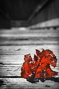 Kelly Hazel - Red Leaf on a Pier