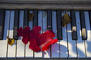 Leafs Photos - Red leaf on old piano keys by Garry Gay