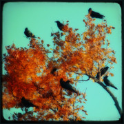 Corvus Brachyrhynchos Prints - Red Leaves Among The Ravens Print by Gothicolors And Crows