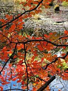 Linda Marcille - Red Leaves by the Pond