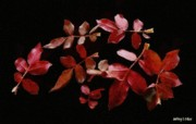 Leaves Digital Art Acrylic Prints - Red Leaves Acrylic Print by Jeff Kolker