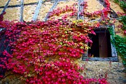 Andy Fletcher - Red Leaves on Window in...