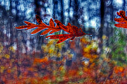 Andy Lawless - red leaves on windshield...