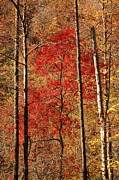 Patrick Shupert Metal Prints - Red Leaves Metal Print by Patrick Shupert