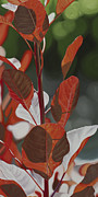 Photorealistic Framed Prints - Red Leaves Framed Print by Sharon Von Ibsch