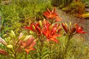 Bonnie Bruno - Red Lilies