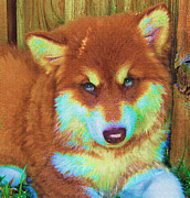 Cute Puppy Digital Art - Red Malamute by Jane Schnetlage