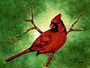Male Cardinals Prints - Red Male Cardinal Print by Nan Wright