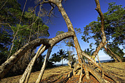 Clear Cut Prints - Red Mangrove Aerial Roots Print by Christian Ziegler