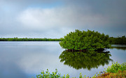 J N Ding Darling National Wildlife Refuge Photos - Red Mangrove Marsh I by Steven Ainsworth