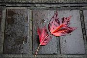 John Daly - Red Maple Bricks