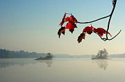 Paul Wash Art - Red Maple Leaves and Islands in the Morning Mist by Paul Wash