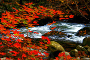 Randall Branham Acrylic Prints - Red Maple Stream  Acrylic Print by Randall Branham