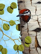 Aspen Tree Paintings - Red-Naped Sapsucker by Rick Bainbridge