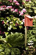 Bonnie Bruno - Red Nesting Box