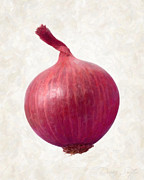 Plant Greeting Cards Painting Prints - Red Onion  Print by Danny Smythe