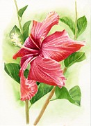 Tropical Flower Painting Posters - Red Orange Hibiscus Poster by Sharon Freeman