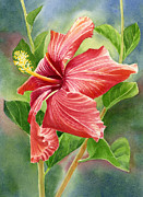 Tropical Flower Painting Posters - Red Orange Hibiscus with Background Poster by Sharon Freeman