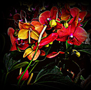 Orchids Art - Red Orchids by Miriam Danar