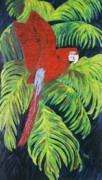 Escape Painting Posters - Red Parrot Poster by Renee Nolan-Riley