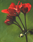 Geranium Paintings - Red Pelargonium by Alecia Underhill