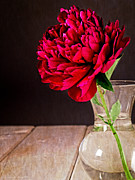 Vase Photos - Red Peony Flower Vase by Edward Fielding