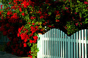 Architectural Garden Scene Posters - Red Poincianas are blooming in Key West Poster by Susanne Van Hulst