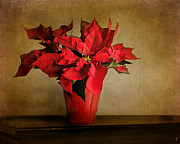 Jai Johnson - Red Poinsettia
