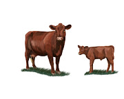 Steer Paintings - Red Polled Cow and calf by Carolyn Guske