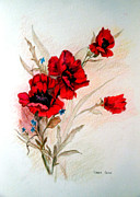 Cards Vintage Drawings Framed Prints - Red Poppies Framed Print by Linda Ginn