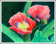 Red Poppies Drawings - Red Poppies by Mariarosa Rockefeller