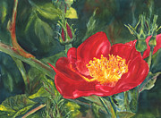Barb Capeletti - Red Poppy