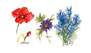 Kathleen Prints - Red Poppy Purple Anemone Blue Bonnet Texas Flowers Print by Kathleen McElwaine