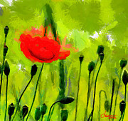 Vincent Dinovici Art - Red Poppy TNM by Vincent DiNovici