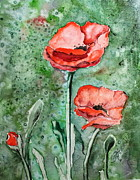 Sheila Howell - Red Poppys