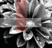 Rain Digital Art Metal Prints - Red Rain Blossom Metal Print by Jamie Lynn
