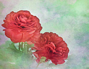 Red Ranunculus Print by David and Carol Kelly